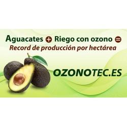 AGUACATES CON OZONO