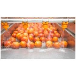 HIDROCOOLING-Lavado de Frutas y Hortalizas